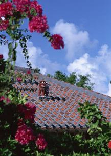 民家の屋根とシーサーの写真素材 [FYI03027859]