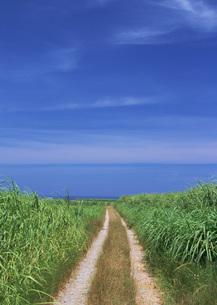 海への道の写真素材 [FYI03027932]