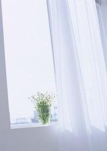 窓辺の花の写真素材 [FYI03028036]