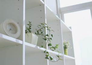 シェルフと観葉植物の写真素材 [FYI03028094]