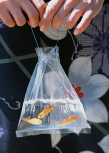夏祭りの金魚の写真素材 [FYI03030339]