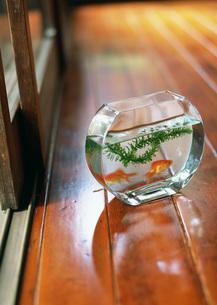 金魚鉢の写真素材 [FYI03030813]