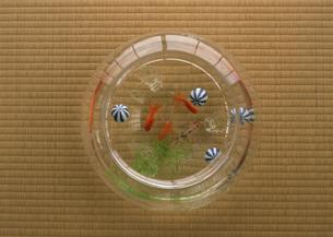 金魚鉢の写真素材 [FYI03030818]