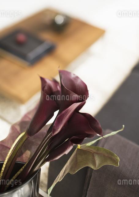 カラーの写真素材 [FYI03032699]