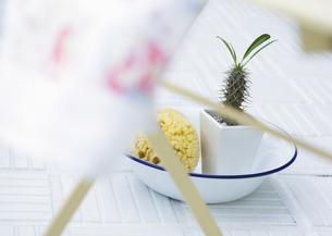 鉢植えとスポンジの写真素材 [FYI03033409]