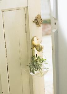 ドアとラベンダーの写真素材 [FYI03033425]