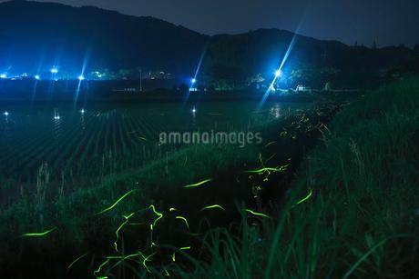 里山の夜に舞うホタルの写真素材 [FYI03035317]