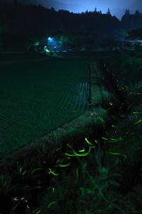 里山の夜に舞うホタルの写真素材 [FYI03035327]