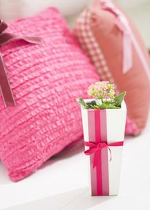 ピンクのクッションとカランコエの写真素材 [FYI03035370]
