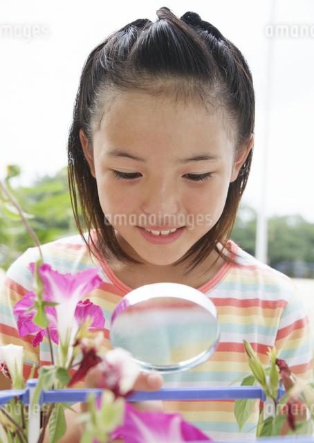 朝顔の観察をする小学生の写真素材 [FYI03036743]