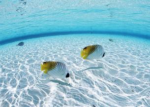 海中の魚の写真素材 [FYI03038185]