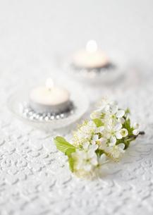 桜とキャンドルの写真素材 [FYI03038462]