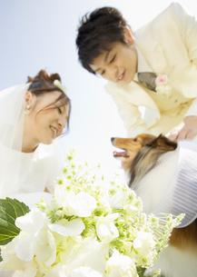 犬と新郎新婦の写真素材 [FYI03038641]