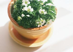 鉢植えの写真素材 [FYI03041006]