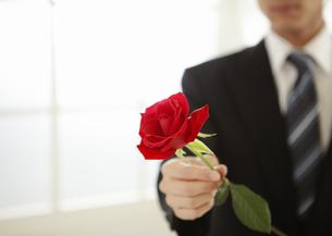 バラを持つ男性の手元の写真素材 [FYI03041247]
