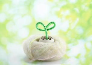 卵の殻から出た新芽のエコロジーイメージの写真素材 [FYI03041383]
