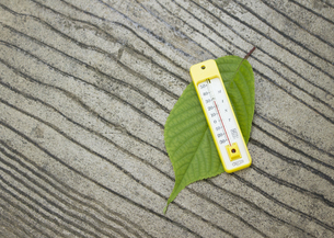 葉の上に置かれた温度計の写真素材 [FYI03041851]