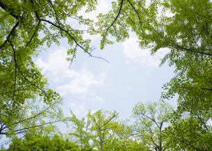 新緑の枝葉の写真素材 [FYI03041968]