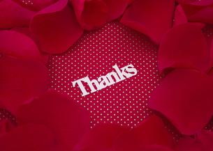"""花びらと""""Thanks""""の文字の写真素材 [FYI03042783]"""