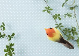 蔓と鳥の飾り罫の写真素材 [FYI03043339]