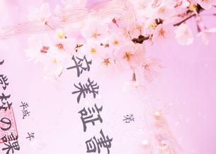 卒業証書と桜の写真素材 [FYI03043525]