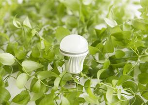 葉に囲まれたLED電球の写真素材 [FYI03043818]