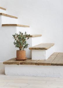階段にある観葉植物の写真素材 [FYI03046586]