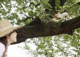 木の上の猫を見つめる女性の写真素材 [FYI03046858]