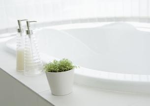 バスルームの観葉植物の写真素材 [FYI03047479]