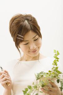植木の手入れをする女性の写真素材 [FYI03048353]