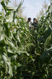 スイートコーンの収穫をする男女の写真素材 [FYI03049642]