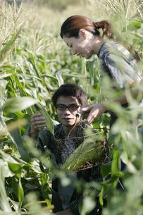 スイートコーンの収穫をする男女の写真素材 [FYI03049654]