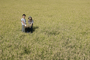 稲田に立つカップルの写真素材 [FYI03049703]