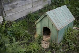 犬小屋の写真素材 [FYI03049765]