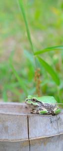 竹株とカエルの写真素材 [FYI03052565]