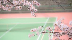 桜とテニスコートの写真素材 [FYI03053152]