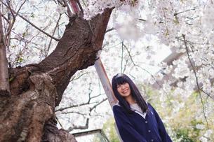 制服女子と桜の写真素材 [FYI03053750]