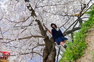 制服女子と桜の写真素材 [FYI03053805]
