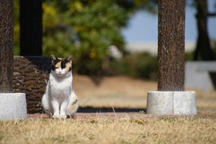 ネコの写真素材 [FYI03054266]
