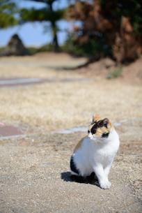 ネコの写真素材 [FYI03054272]