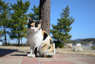 ネコの写真素材 [FYI03054273]