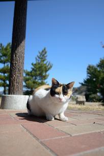 ネコの写真素材 [FYI03054274]