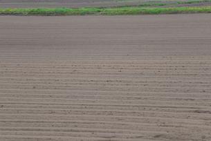 畑の写真素材 [FYI03054298]