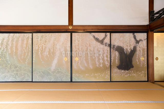 桜の襖絵の写真素材 [FYI03054487]
