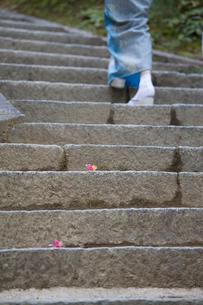 草履で石階段を歩く着物姿の女性の写真素材 [FYI03054591]
