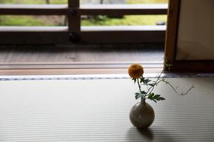 縁側近くの畳の上の花瓶の写真素材 [FYI03054710]