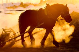 早朝の馬の写真素材 [FYI03054769]