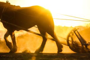 早朝の馬の写真素材 [FYI03054787]