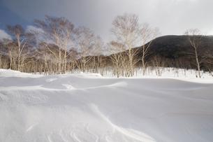 冬の風景の写真素材 [FYI03054798]