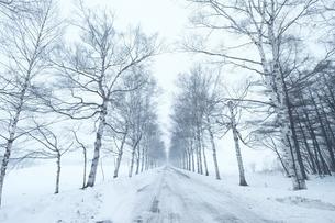 冬の北海道の写真素材 [FYI03054814]